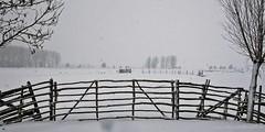 Winter in Holland (rudyvandeleemput) Tags: winter snow holland netherlands december sneeuw