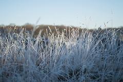 Frozen land (Isbjrn-Photography) Tags: landscape freeze land nikond3200