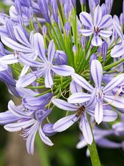 West Point 2014-12_2840.jpg (travischauphotography) Tags: flowers plants sydney australia botany natinalpark westheadlookout westpointlookout