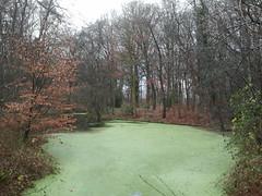 Seldensate Park (Truus, Bob & Jan too!) Tags: park winter castle water netherlands pond estate nederland vijver noordbrabant landgoed berlicum seldensate middelrode