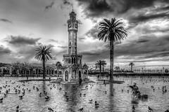 Konak,zmir (Nejdet Duzen) Tags: travel bird rain turkey square blackwhite pigeon trkiye palm clocktower palmiye konak izmir ku gvercin meydan turkei siyahbeyaz seyahat yamur saatkulesi