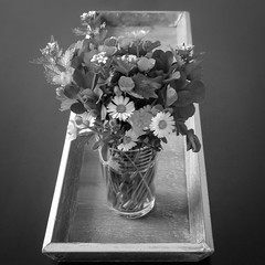 Meadow in a glass (CarSaBe) Tags: bw white black flower nature water glass square table wasser buttercup natur meadow wiese blumen squareformat daisy vase clover tisch schwarz klee gnseblmchen tablett butterblume weis