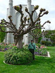 Ali at Temple Square, Salt Lake City (ali eminov) Tags: flowers trees people cities ali saltlakecity templesquare templeannex