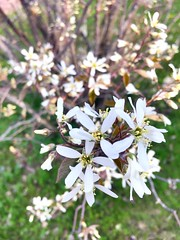Spring has finally arrived ! (rayanmust) Tags: flowers white tree beautiful spring pretty fresh bahar