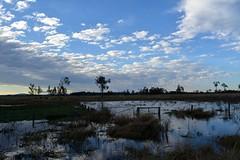 north east (dustaway) Tags: winter water reflections landscape flooding australia nsw australianlandscape fenceline northernrivers richmondvalley seelimcreek seelemscreek seelimscreek