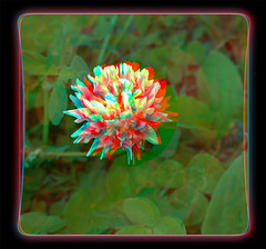 Not An Ugly Clover Bloom - Anaglyph 3D (DarkOnus) Tags: flower macro closeup stereogram 3d weed phone pennsylvania cell 8 anaglyph stereo bloom mate clover stereography buckscounty huawei notugly darkonus