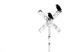 X Marks The Spot (Matthew Bickham) Tags: birds bay stokes