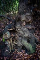 Old Frank (M W Pinsent) Tags: woodland kent belvedere frankspark