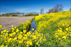 yellow (heavenuphere) Tags: flowers blue sky house flower tree netherlands field yellow landscape spring europe ditch nederland rape dyke brielle polder dike rapeseed zuidholland southholland 24105mm zwartewaal