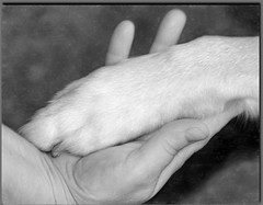 Hand Shake (Missi Gregorius) Tags: dog love otis friendship devotion trust loyal
