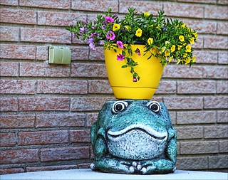 Froggy Is Ready For Courting