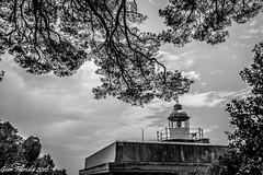 Lighthouse & pine trees (Gian Floridia) Tags: bw lighthouse liguria bn portofino pinetrees pineta bienne