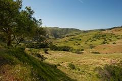 Imagine (kirstenscamera) Tags: california ca mountain tree green nature field walking coast nikon hiking meadow bigsur twist bluesky trail coastal backcountry centralcoast range bixby