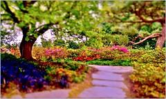 Secret Garden (farmspeedracer) Tags: park plant flower color tree nature garden spring may fairy soul tale