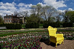 Yellow Chair - Cantigny - Wheaton IL (Meridith112) Tags: bluesky clouds cloud mansion mccormick mccormickscantignyhome mccormicksmansion mccormickshome amyirwinmccormick colonelrobertrmccormick cantigny cantignygardens cantignypark wheaton il illinois dupagecounty midwest yellow yellowchair home park garden nikon nikon2485 nikond610 spring tulip tulipa tulips april 2016 bench