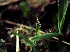 #natura #macro #rugiada (iliturner) Tags: rugiada natura macro