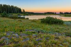 Summer Sunrise (Happy Photographer) Tags: grand mesa national forest sunrise summer lake wildflowers trees amyhudechek colorado nature landscape