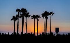 Venice Beach Sunset (DIMPICTURES) Tags: sunset venice beach skate park palm tree california los angeles