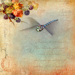 There is a time for everything . . . (dragonflydreams88) Tags: dragonflydreams88 dragonfly inflight