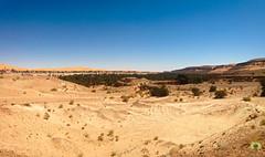 La palmeraie de Taghit (Ath Salem) Tags: algrie bchar taghit beni abbes kenadsa barrage djorf torba dsert sahara tourisme dcouverte palmeraie           dunes zousfana saoura