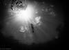 Reach for the Sky (jcl8888) Tags: lightrays snellswindow sunbeam nature naturallight scuba florida underwater nikon d7200 nauticam tokina 1017mm fisheye lookingup diving snorkeler clear bubbles water spring waving sun lightbeams rays the challenge game challengegamewinner