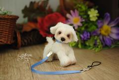 goober02 (Zhanna Zolotina) Tags: miniature dog ooak handmade toyzz tinydolhousetoyzz altair teddy bear dollhouse puppenhaus blythe