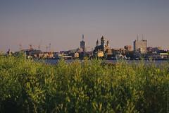 (engine9.ru) Tags:      morning arkhangelsk russia plants