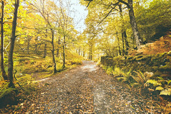 Lake District (AlanHowe :)) Tags: golden autumn day little langdale lake district alanhowe