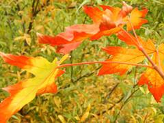 Spider Web (Alien Encounter) Tags: leaves fall autumn red orange spiderweb season seasonal nikon coolpix p500