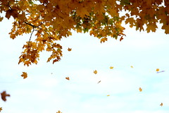Lovin Fall (The Dolly Mama) Tags: autumn trees fall heart kentucky windy falling 4autumn hwer