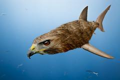 Shawk (SkyPayton) Tags: animal mexico shark morph greatwhiteshark guadalupeisland