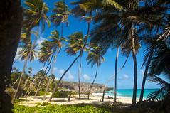 DSC_0022 (@giovanicordioli | gmcordioli@gmail.com) Tags: trip vacation nature paradise peace natureza frias peaceful barbados caribbean caribe beutiful natgeo visitebarbados visitbarbados