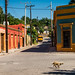 2014 - El Fuerte - Getalong Little Doggie