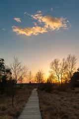 evening mood (frank-heinen-photographer) Tags: autumn cloud nature silhouette landscape geotagged warm sonnenuntergang swamp dmmerung moor landschaft sonne plank bel steg landschaftlandscape belgien wallonie hohesvenn hautesfagnes sumpf hochmoor montrigi waimessourbrodt geo:lat=5051797525 geo:lon=606083707 moorswamp wwwfrankheinenphotographerde