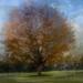 tree5v2