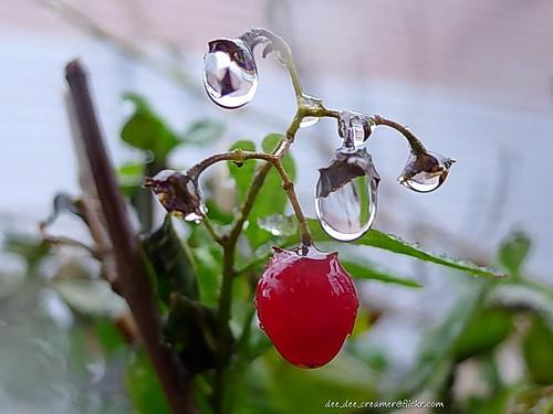 The drop_berries