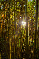 Bamboo Forest (IanLudwig) Tags: canon photography hawaii lee kauai hawaiian beaches wailua tog togs lydgate gnd hawaiibeaches leefilters niksoftware hawaiiphotos canon1740mmf40lusm vsco cep4 canon5dmkiii hawaiianphotography 5dmkiii rgnd canon5dmarkiii ianludwig lee4x4cpl leefilterfoundation lightroom5 darylbensonnd3reversegradualneutraldensity adobephotoshopcc