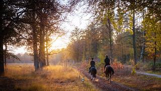 Atumn Horses