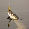 Nov14_0229 (Cap'n Fishy) Tags: pike pikefishing