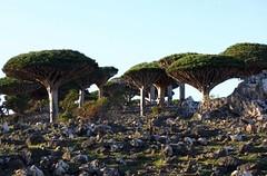 UNESCO heritage sites - Socotra archipelago - Yemen - By Amgad Ellia 07 (Amgad Ellia) Tags: heritage by unesco yemen amgad archipelago sites ellia socotra