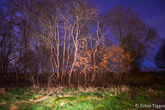 Bume bei Nacht (fabio.tigges) Tags: sky cold night forest dark scary nacht wiese himmel windy kalt nordsee bume sterne