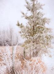 Happy New Year 2015!!! (anniedaisybaby) Tags: thankyou experiment happynewyear 2015 auldlangsyne frostyday scottishsinger mairicampbell worthlisteningto magicunicornfrontpage topazimpressions subtletexturekerstinfrank