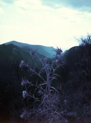 Peloponnes 2014 (frauspatzi) Tags: nature purple hiking natur rangefinder mani wanderung peloponnes lomochromepurple