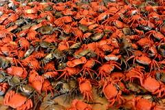 Crabs's Invasion (Fernando Comendador Marín) Tags: red rojo nikon crab crabs invasion cangrejos cangrejo 1v2