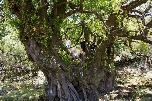 Madeira Familienreisen - Gruppenfoto im Zauberwald