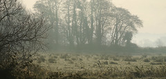 Alders in the mist (jump for joy2010) Tags: uk trees england mist cold nature beautiful birds misty rural landscape countryside december silhouettes somerset frosty alder winterwalk 2014 somersetlevels