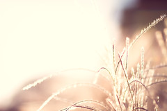 Bask in the Warmth (Icedavis) Tags: sunset grass minnesota landscape glow arboretum prairie mn jaredshot