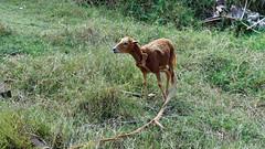 2014-12-09_12-20-31_ILCE-6000_4506_DxO (miguel.discart) Tags: voyage cuba dxo animaux vacance visite 2014 editedphoto createdbydxo