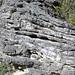 Calcarenitic eolianite (Hanna Bay Member, Rice Bay Formation, Holocene; Graham's Harbour, San Salvador Island, Bahamas) 2