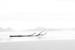 (Moyses Lavagnoli) Tags: blackandwhite tree beach minimalism